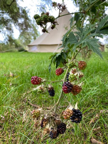 Luxusgartencamping #14