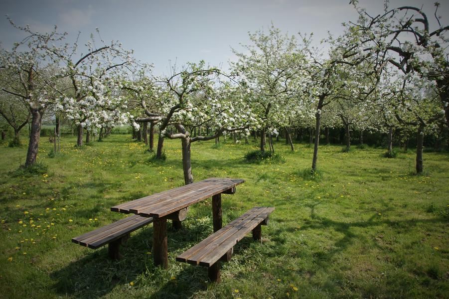Lovely quiet orchard between meadows, near Zutphen #10