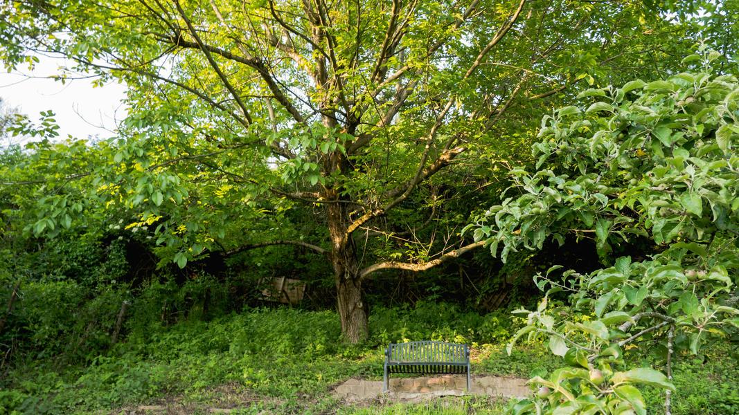 Heidelberg Open Air Cherry Tree #7