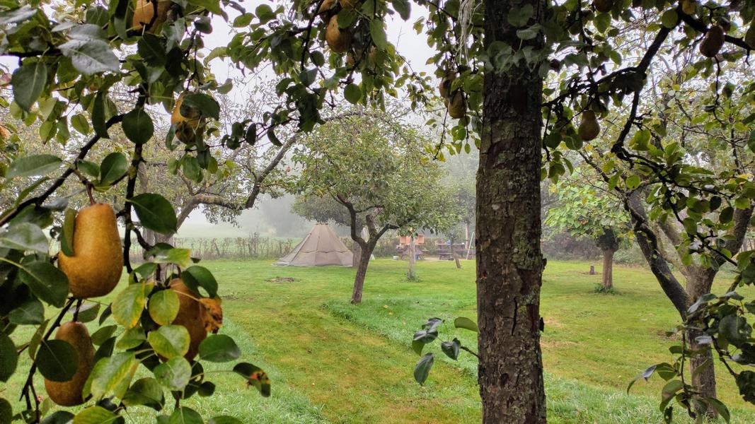 Lovely quiet orchard between meadows, near Zutphen #1