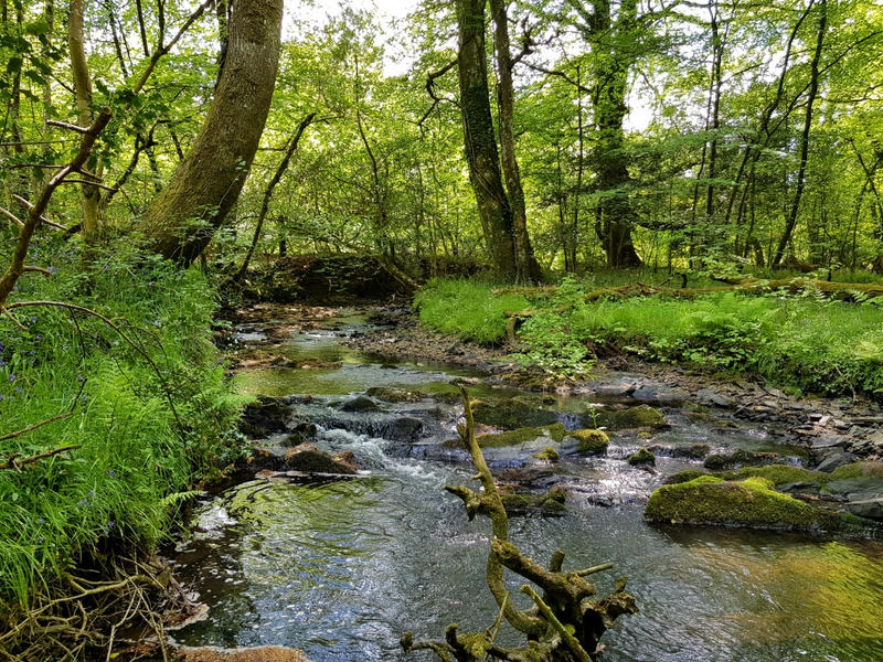 A secluded, idyllic and magical space by ancient trees and river #3