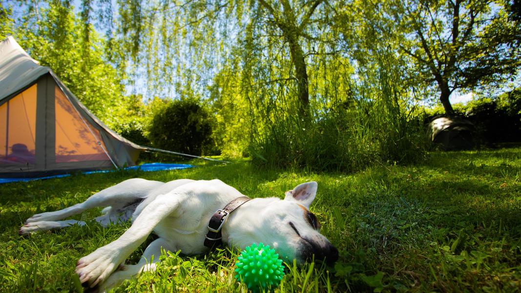 Entspannen Sie sich im ruhigen magischen Garten von Maison Sax #2