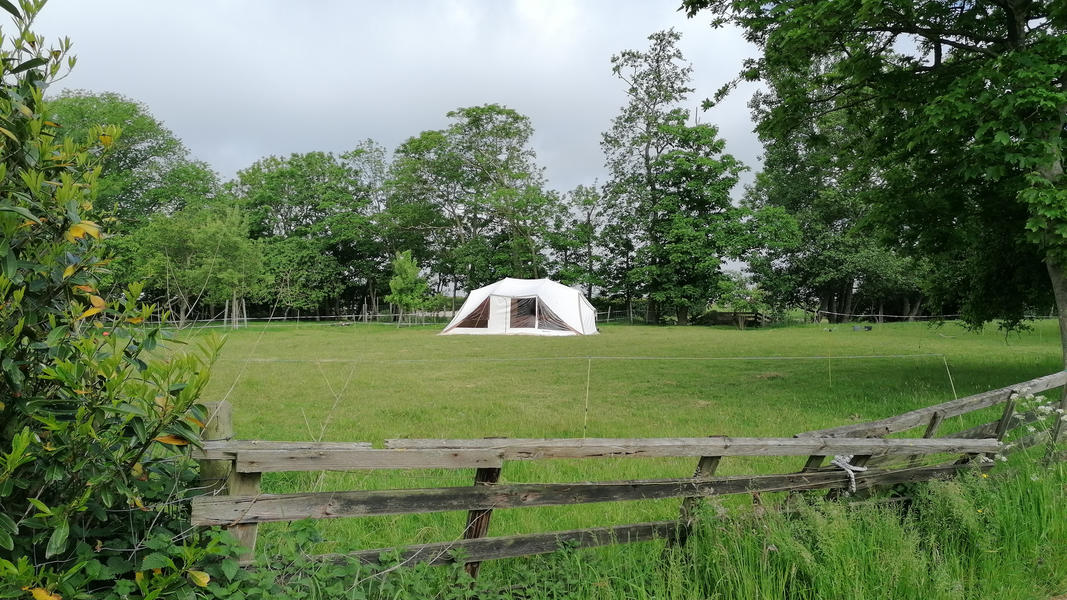 Camping on the farm with cows, sheep, horses, chickens and a dog! #1
