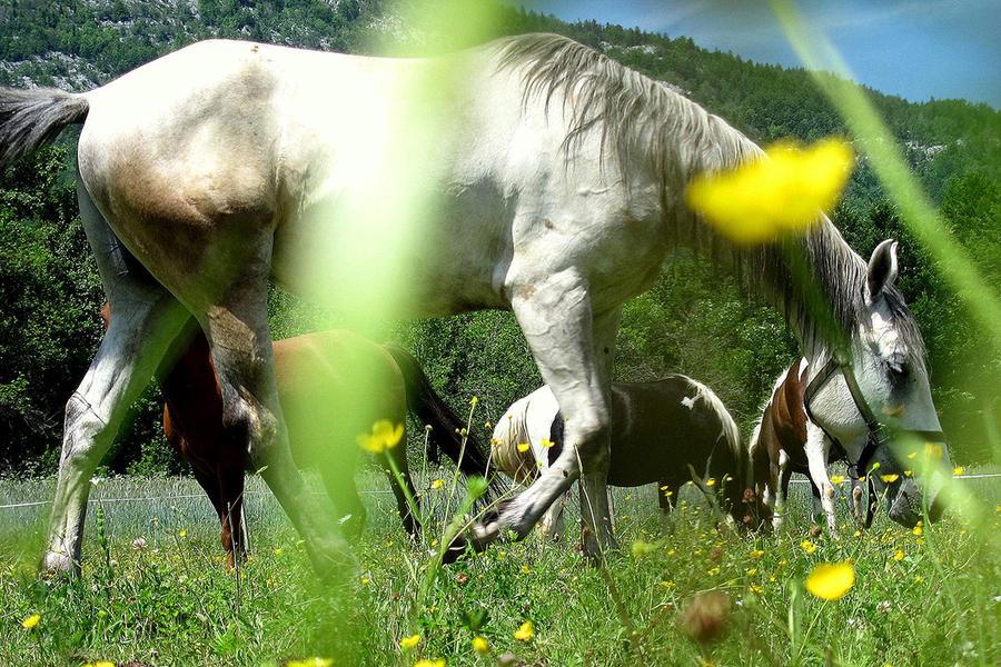 Linden Tree Retreat & Ranch #5