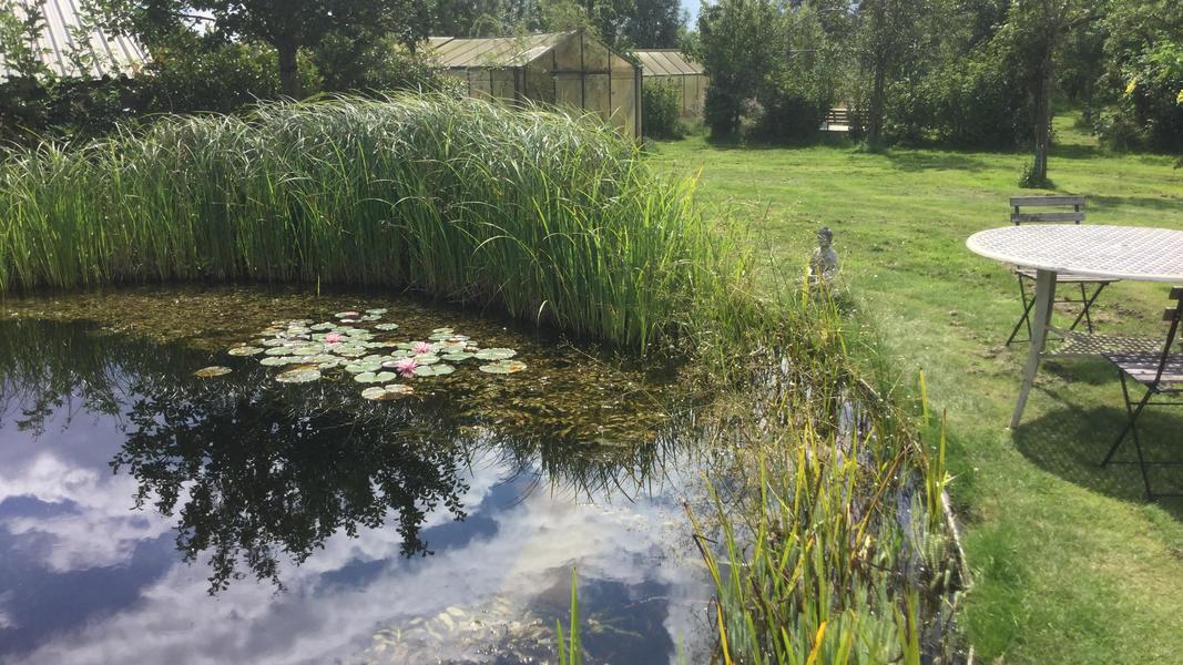 Minicamping met zwemvijver en vuurplaatsen op Landgoed. 2ha wandelgebied #8