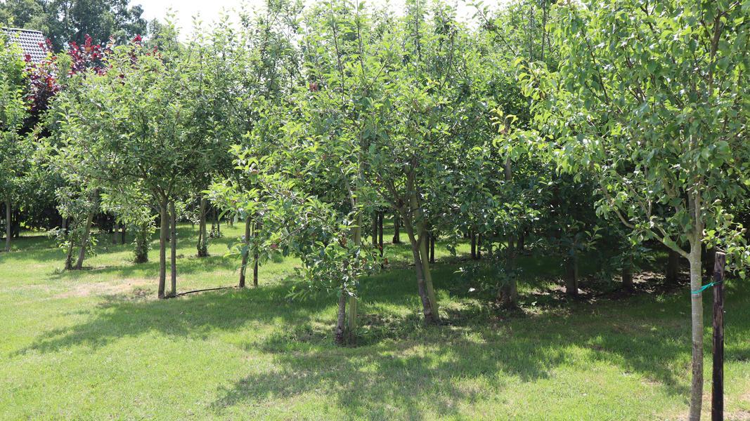 Ruhiger Ort im Obstgarten mit Blick auf Vogelwanderweg #4