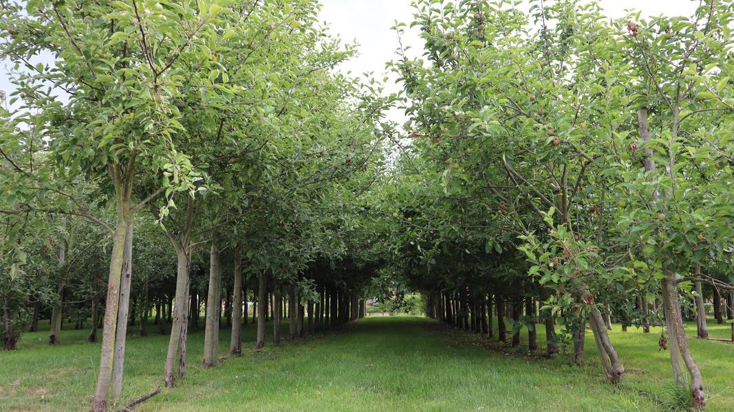 Ruhiger Ort im Obstgarten mit Blick auf Vogelwanderweg #5