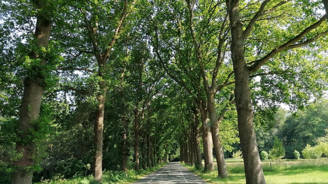 Ruhiger Ort im Obstgarten mit Blick auf Vogelwanderweg #9