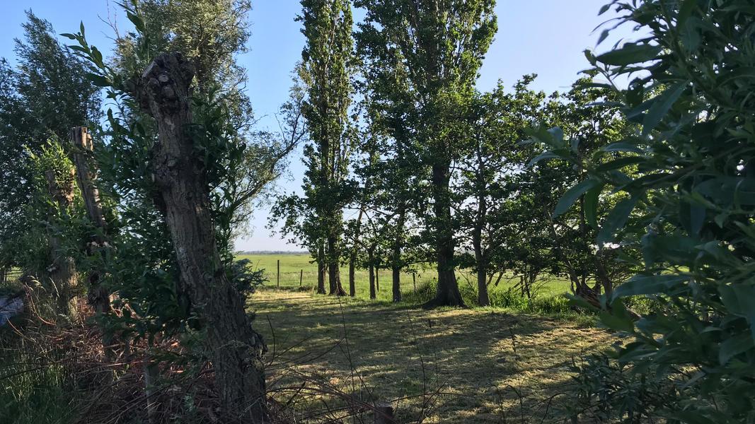 Jouw plekje voor de nacht in de polder van 100 m2 #16