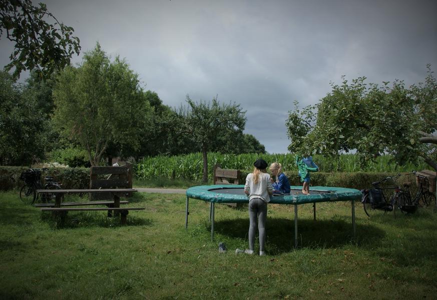 Lovely quiet orchard between meadows, near Zutphen #5