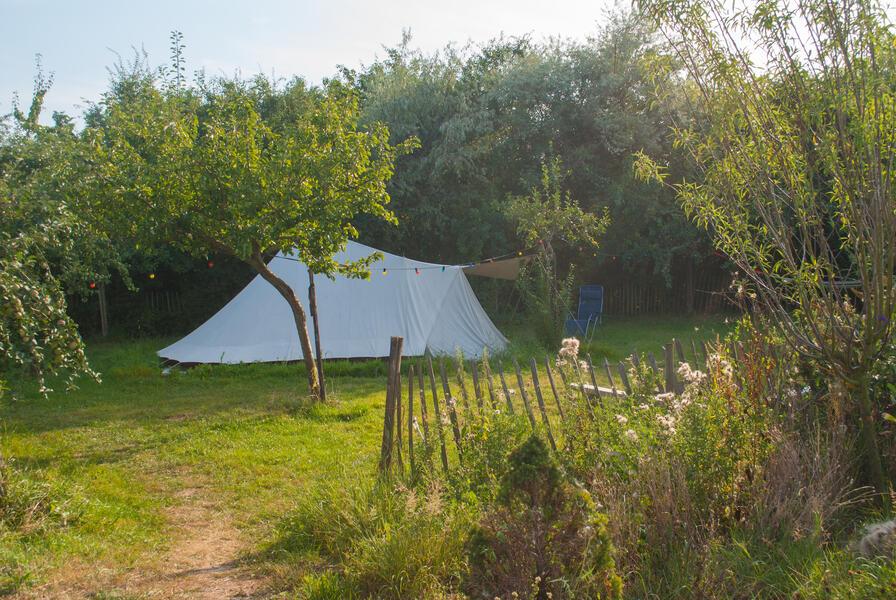 Camping in a de Waard Enlarged Herring Gull, on the organic bynamic farm #5
