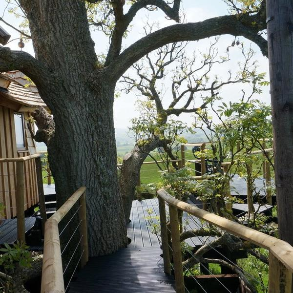 A real Tree House, a real craft masterpiece in an ancient Ash Tree with 360 degree views. #5
