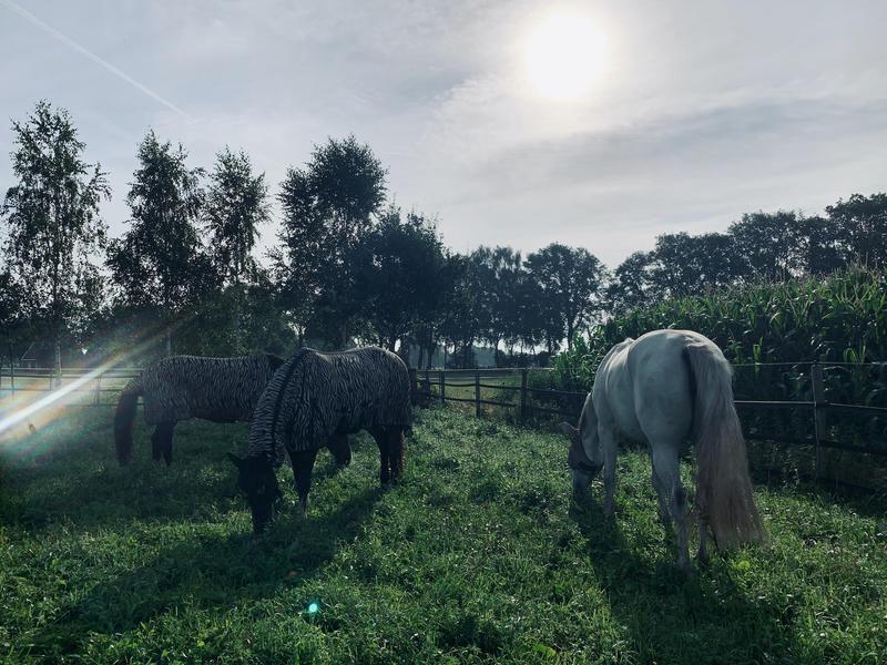 Gemütliches Familienzelt zwischen den Pferden! #3