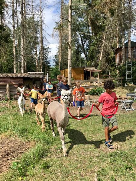 Rustig kamperen in een rustige omgeving tussen rustgevende dieren! #6