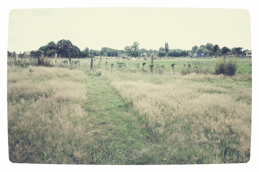 Kindvriendelijke tuin of weiland in Letterhoutem! #10
