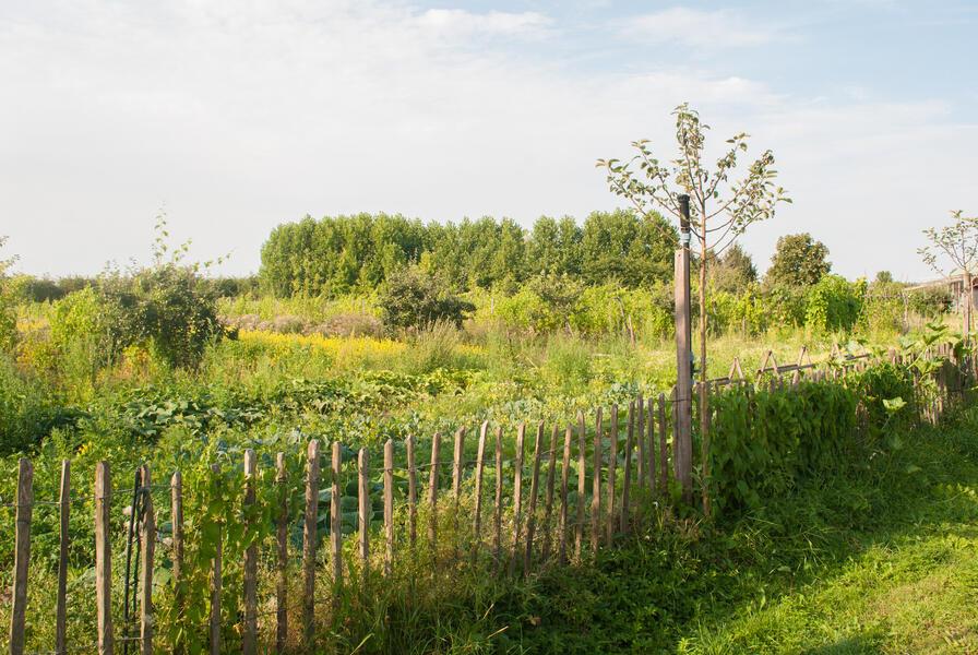 Camping in a de Waard Enlarged Herring Gull, on the organic bynamic farm #6
