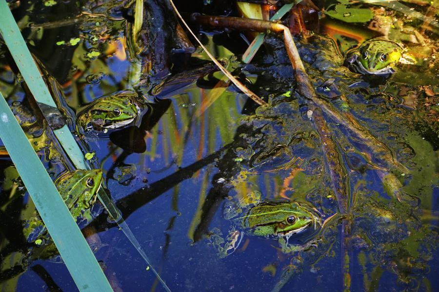ruhige Retro-Karawane neben einem Teich #7