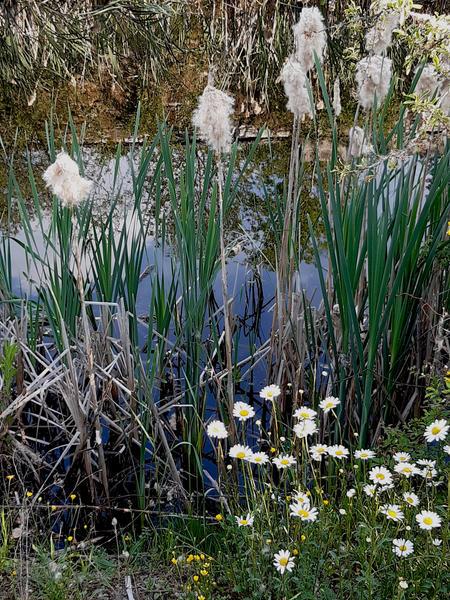 Camping an einem ruhigen Ort mit einem Teich! (3) #8