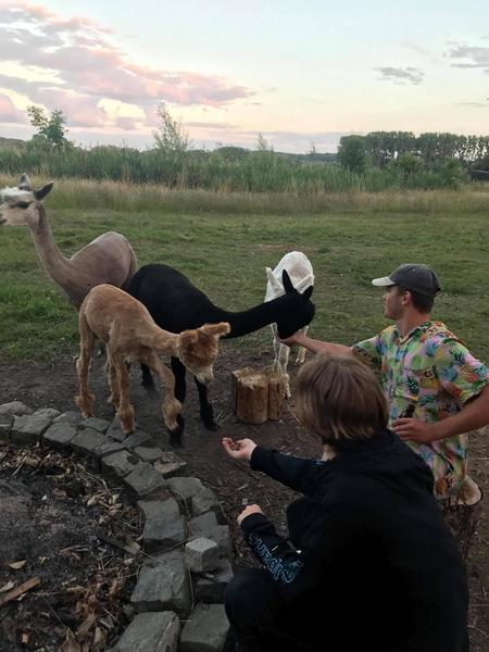 Lovely camping close to our Alpacas in a quiet environment. #9