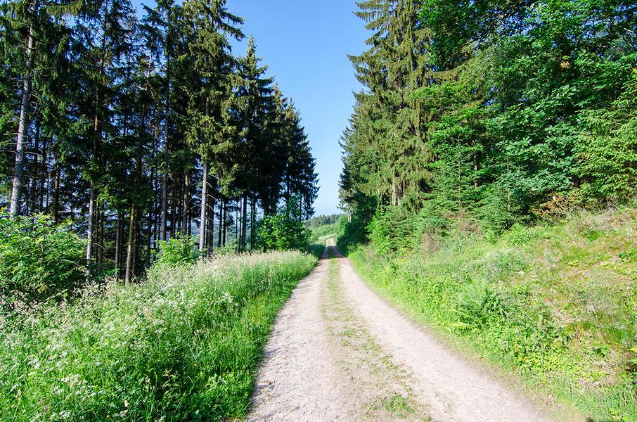 """Nature campsite """"Am Naturschutzgebiet"""" #13"""