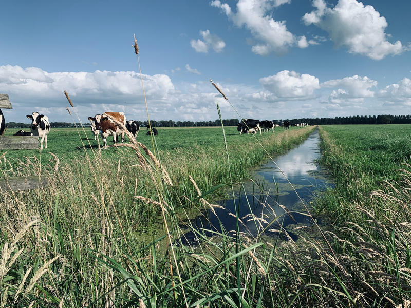 Relax on a farm in the middle of the Alblasserwaard polder #5