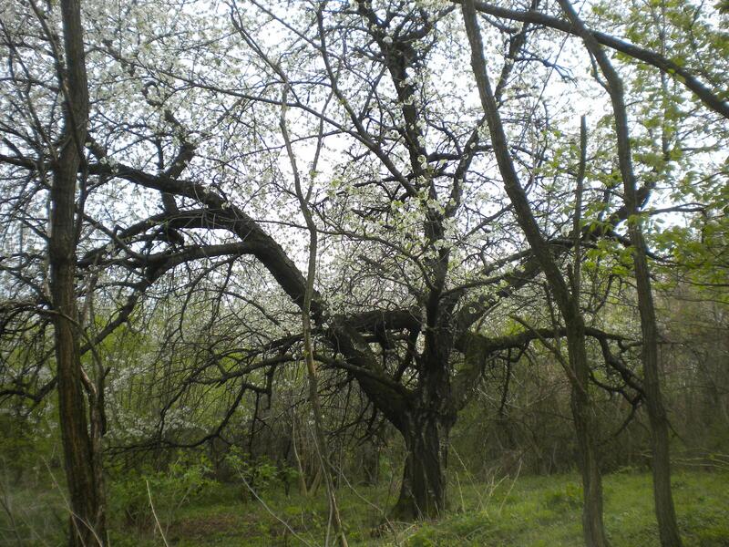 Krisztian's forest garden #1