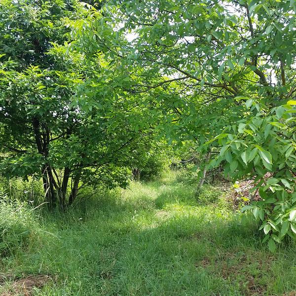 Krisztian's forest garden #3