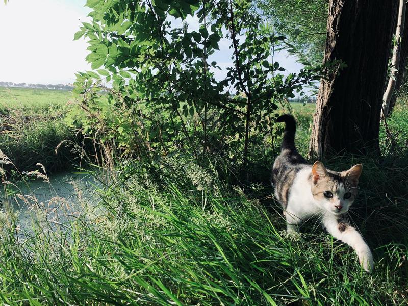 Kom tot rust op boerderij midden in de polder van de Alblasserwaard #4