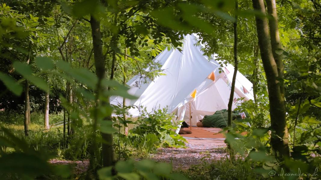 Bell tent in a beautiful woodland copse #1