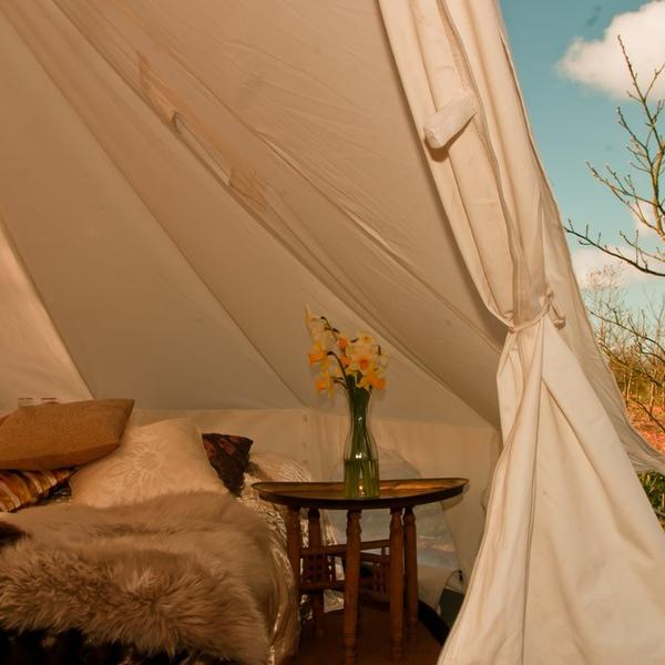 Bell tent in a beautiful woodland copse #2