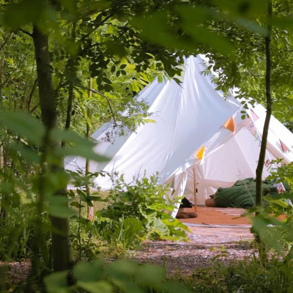 Bell tent in a beautiful woodland copse #4