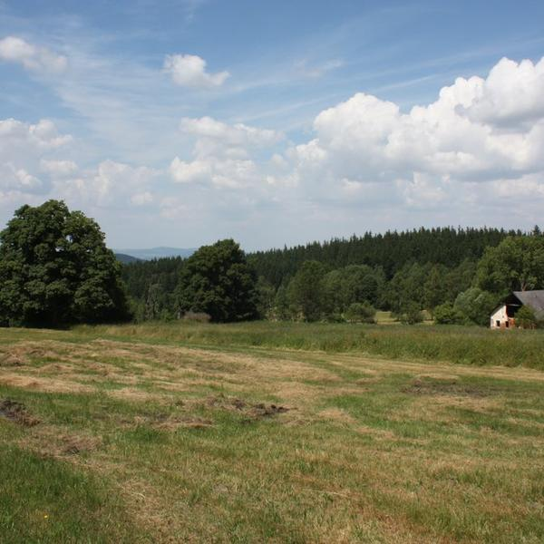 Enjoy the nature of the Bohemian forest #2