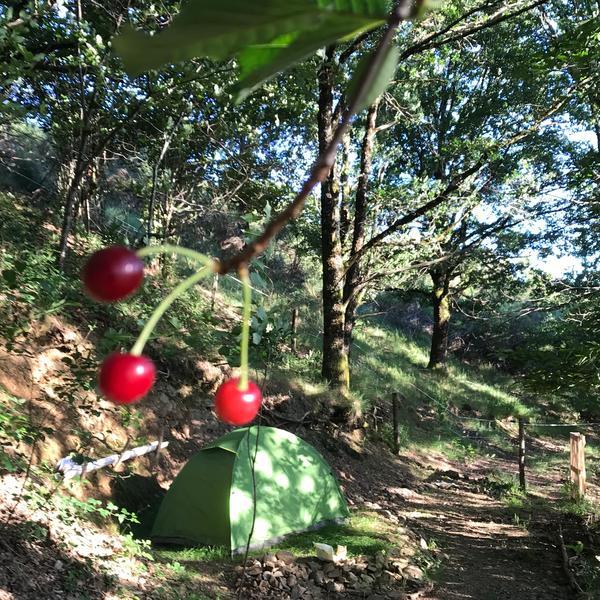 🌳🐿 The woodland garden #11