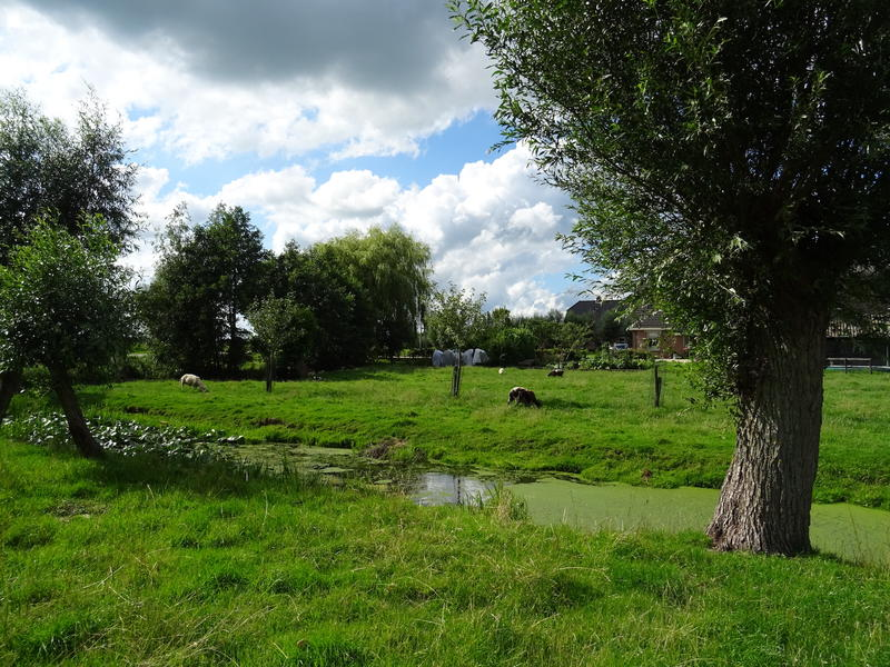 Idyllic camper place in the middle of the polder, with lots of peace and space #2