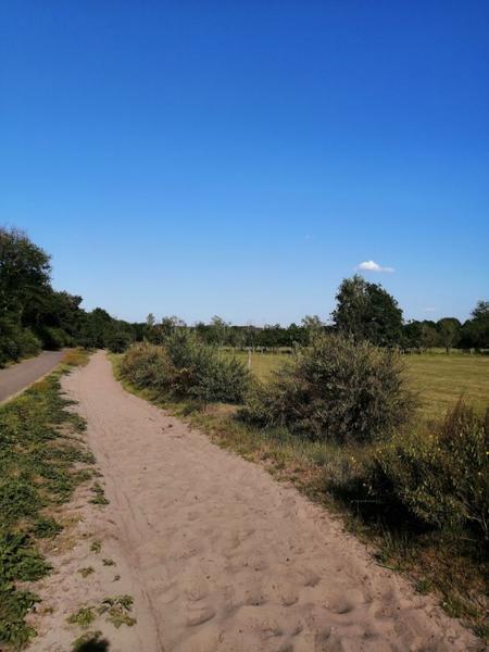 Off-grid - Ecobobo on the edge of the Loonse- en Drunense Duinen (DW) nature park #5
