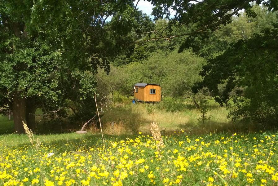 a construction trailer in the Schorfheide-Chorin biosphere reserve #3
