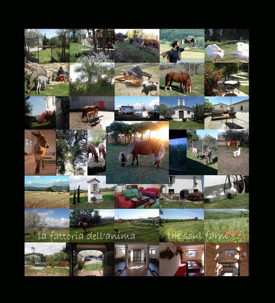 The Soul Farm #1