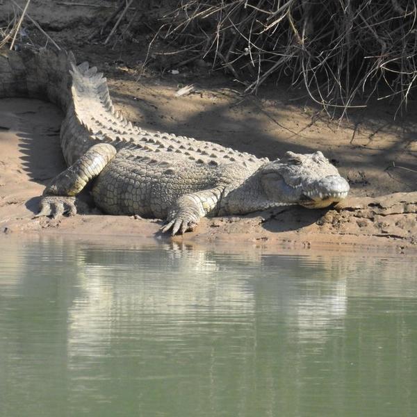 River-Facing Namibian Campsite #4
