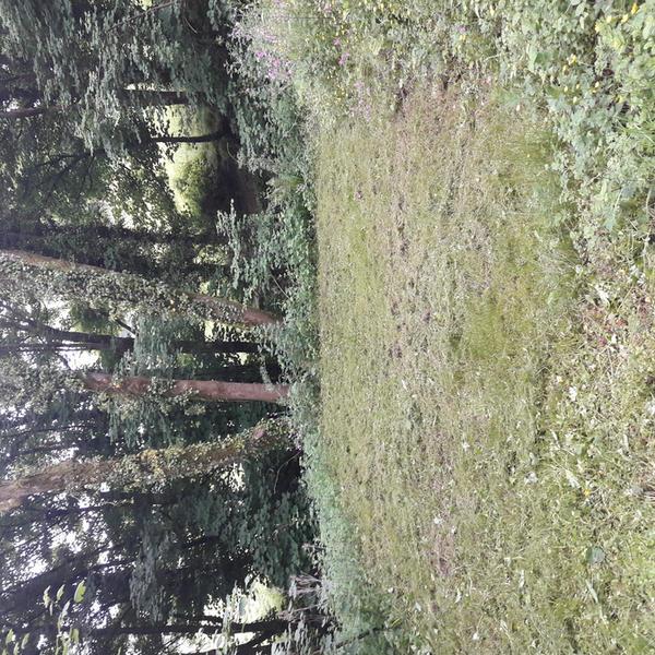Rock Ridge Retreat #3