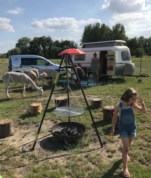 Camping Alpaca #13