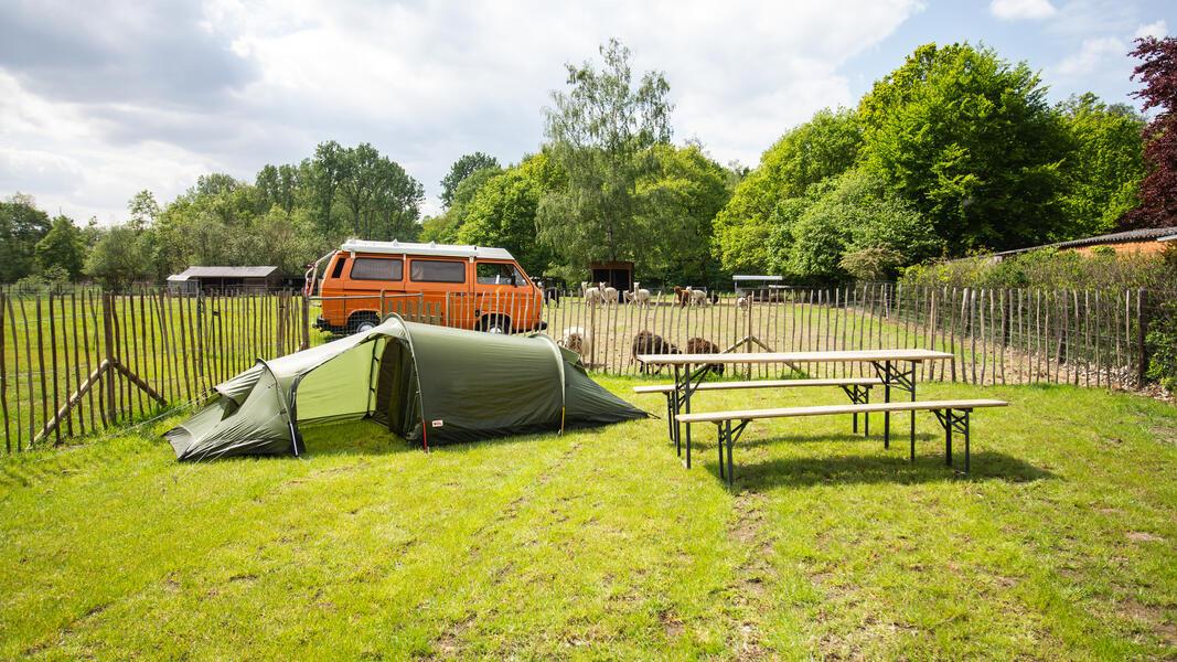 Camping Alpaca #6