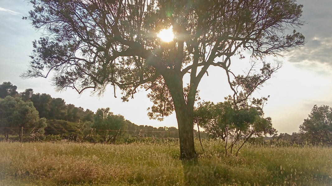 Finca La Solucion Bamping Off the Grid in Rural Spain #4
