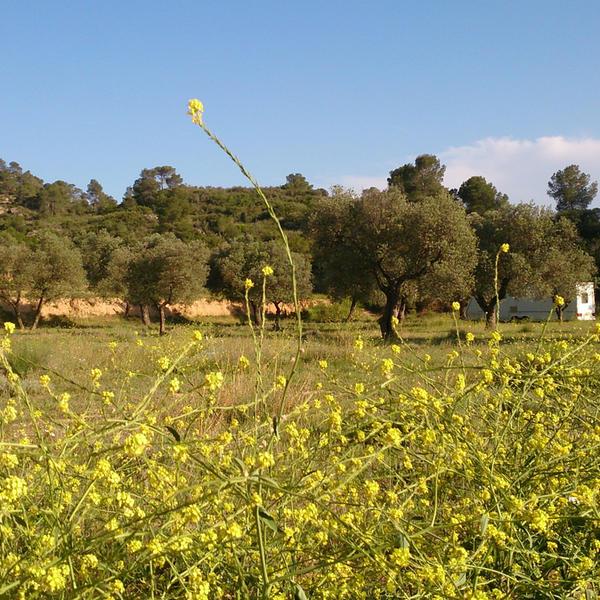 Finca La Solucion Bamping Off the Grid in Rural Spain #6