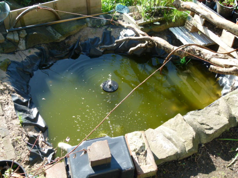 Micro Orchard with Aquaponics, Greengage, Plum and Apple #2