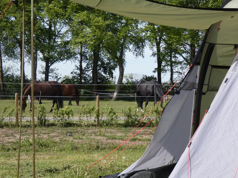 Gezellige familietent tussen de paarden! #4