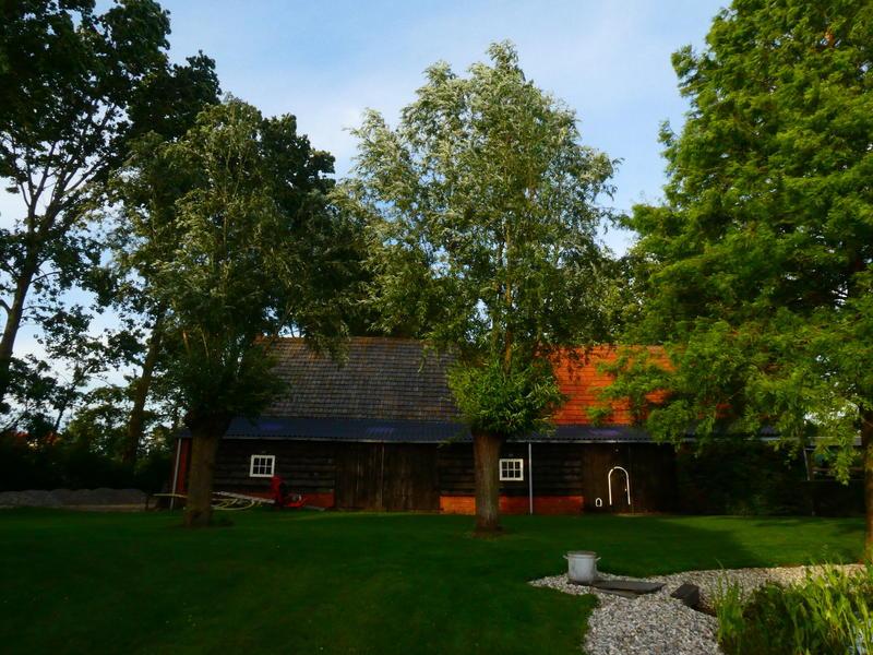 Camper spot on a quiet yard in the polders of Zeeuws-Vlaanderen #6