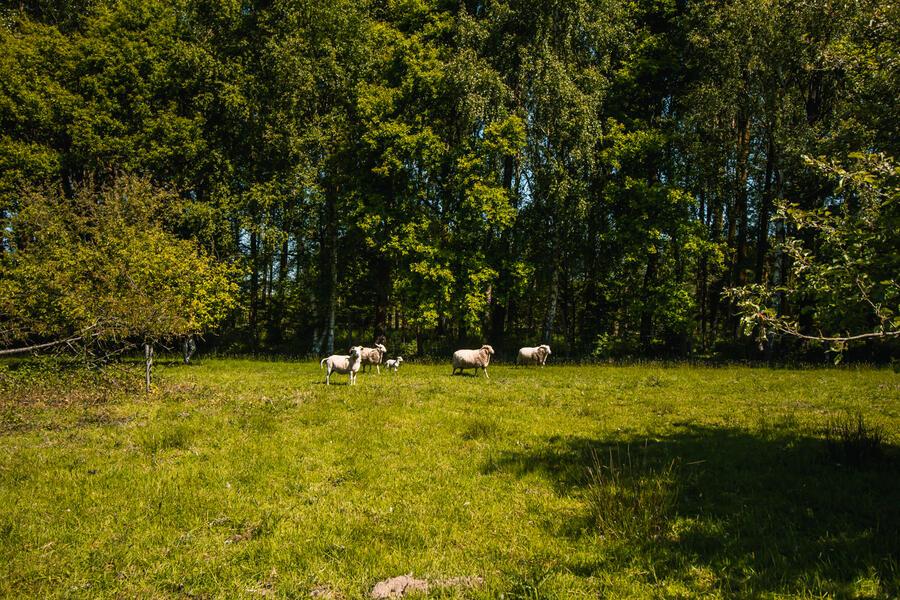 Idyllisches Camping in der Nähe von Wald und wunderschönem 'Pajottenland' #8