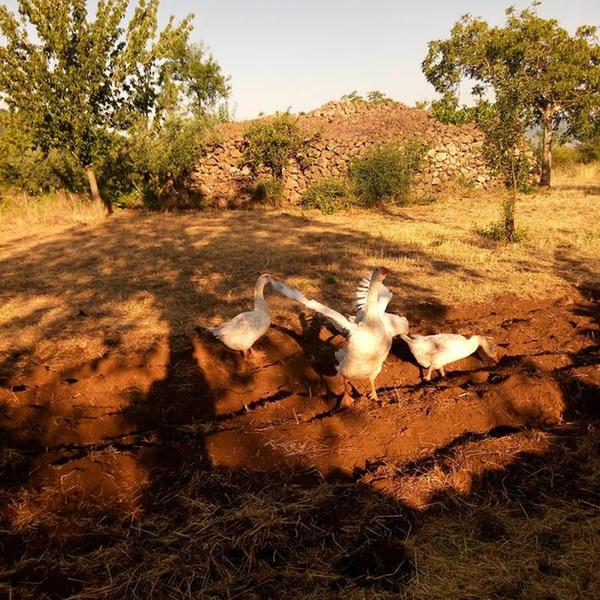 ETNA NATURAL ORGANIC FARM CAMPSITE #4