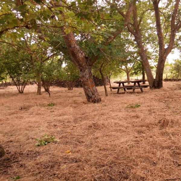 ETNA NATURAL ORGANIC FARM CAMPSITE #5