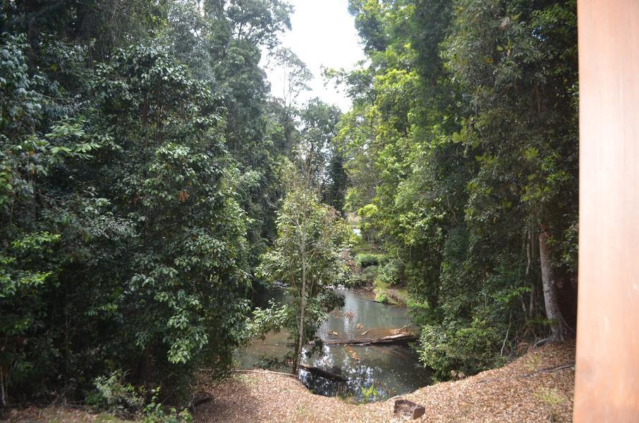 Riverfront rainforest privacy #1